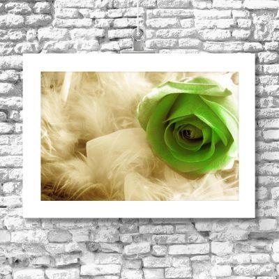 motyw kwiatów plakat