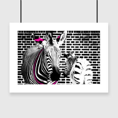dwie zebry z elementem różu na plakacie