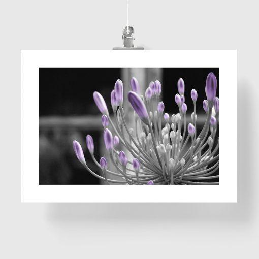 czarno-biały plakat z motywem kwiata