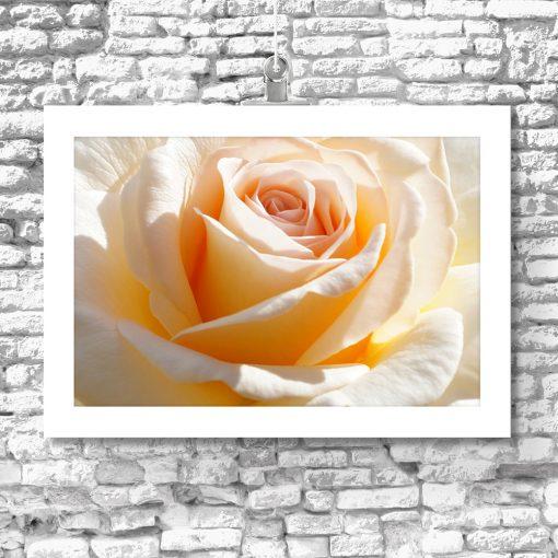 żółta róża na plakacie