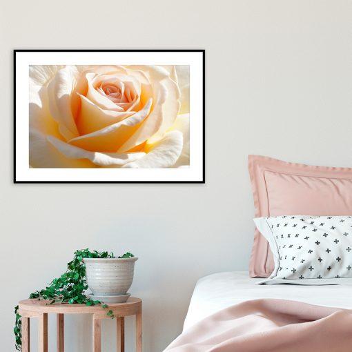 plakat żółta róża