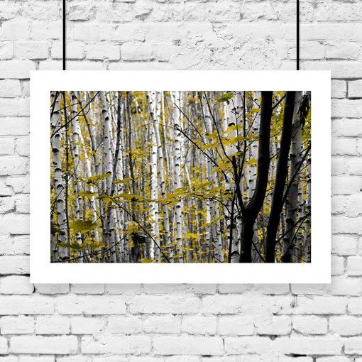 plakat z motywem drzew z liśćmi