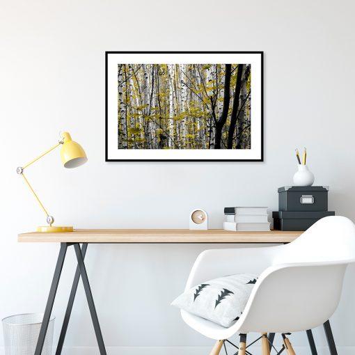 brzozowy lasek na plakacie