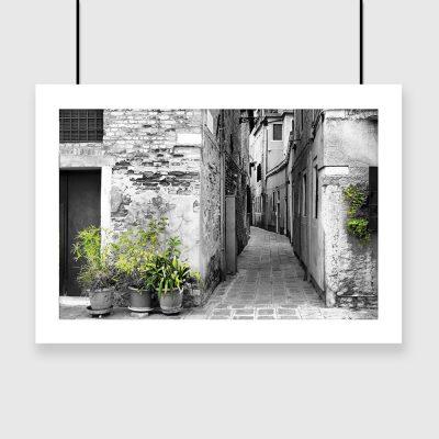 plakat wąska ulica rośliny