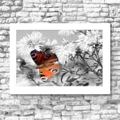 plakaty z motylkami
