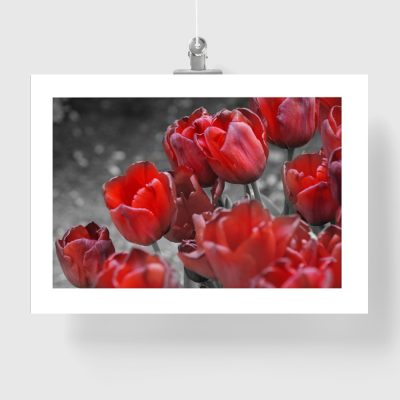 czerwony plakat z motywem kwiatowym
