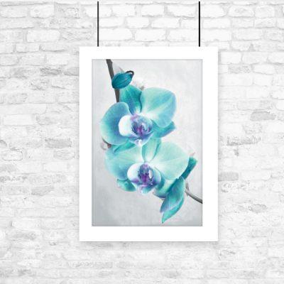 niebieski plakat z orchideą