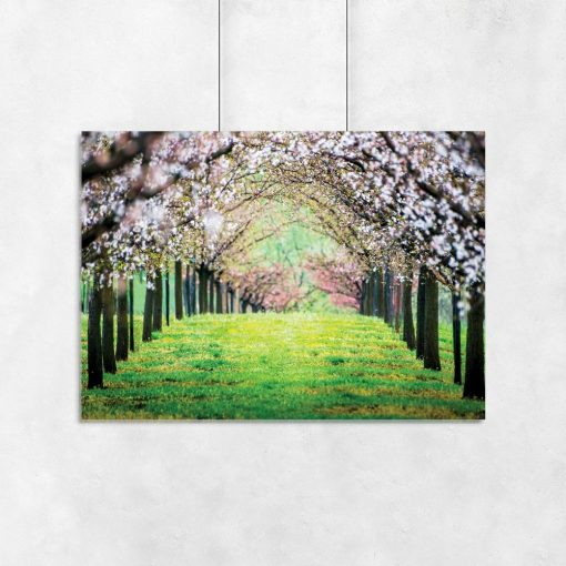 plakat drzewka na zielonej trawiei