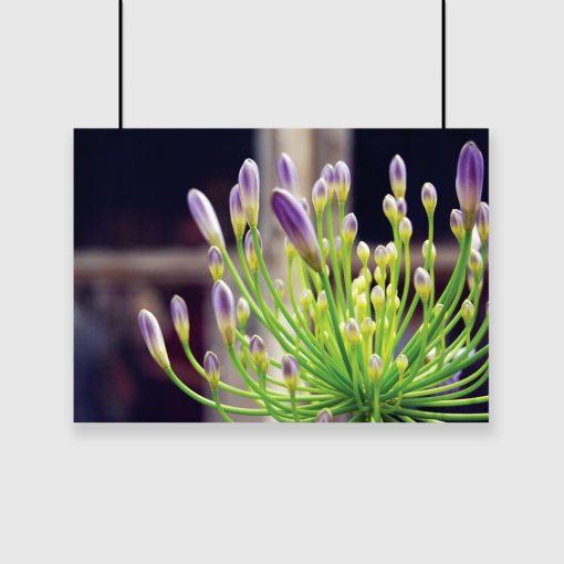 plakat z motywem fioletowych pąków