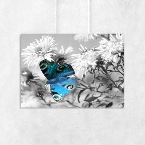 plakat niebieski motyl