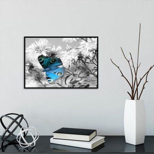 czarno-biały plakat z niebieskim motylem