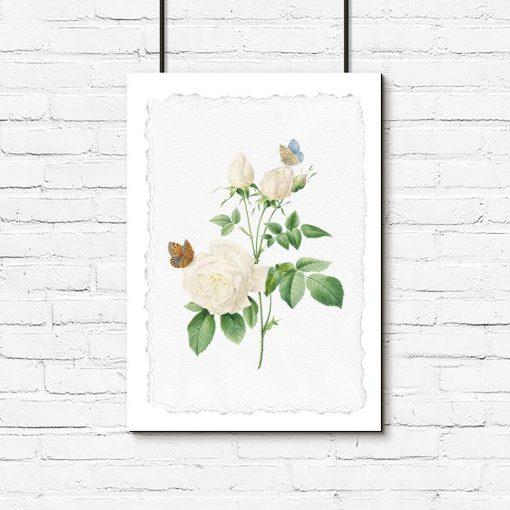 plakat z motywem róży