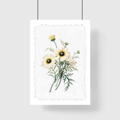 plakat białe kwiaty