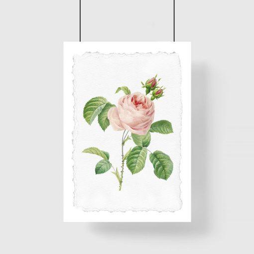 plakat z kwiatem róży