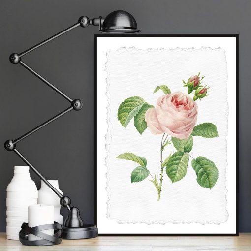 plakat z różową różą