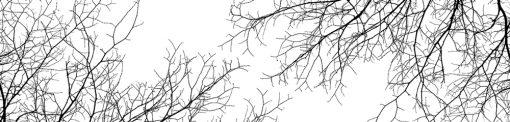 fototapeta przedstawiająca gałęzie