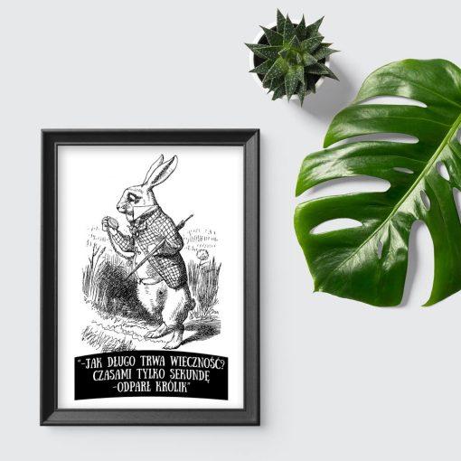 plakat królik