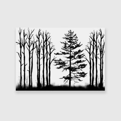 czarno-biały obraz las