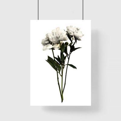 motyw kwiatowy na plakacie białym