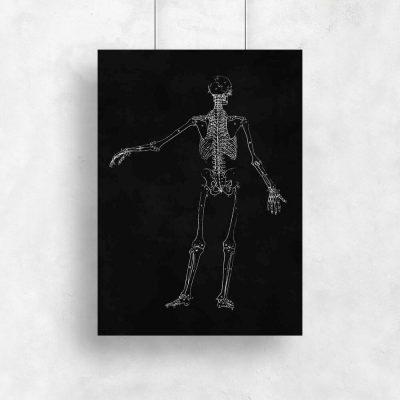 Plakat - Budowa szkieletu