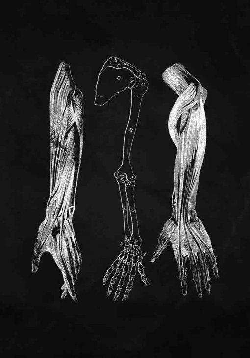 Plakat z anatomią przedramienia