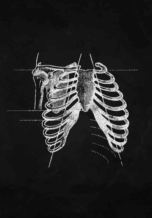 Plakat z anatomią barku