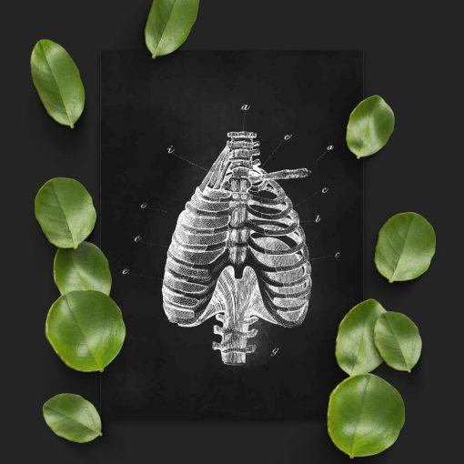 Plakat dla fizjoterapeuty - Klatka piersiowa