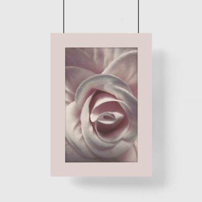 Plakat - Różowa róża do salonu