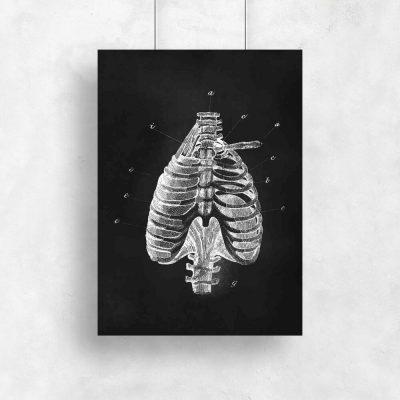 Plakat z klatką piersiową do gabinetu fizjoterapii