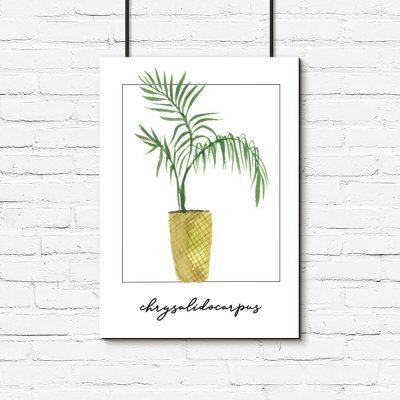 Plakat z palmą areca do biura