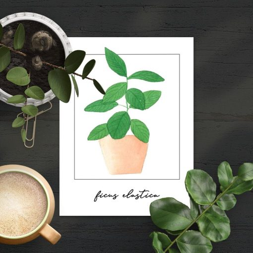 Plakat z figowcem na prezent