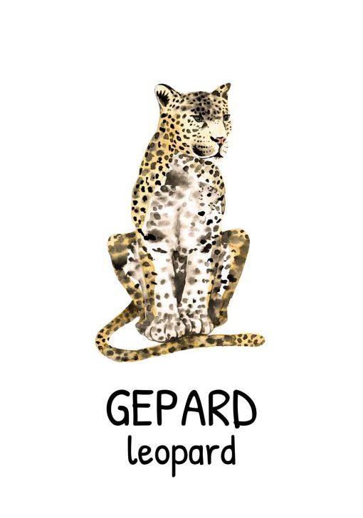 leopard-gepard angielsko-polski plakat dla dzieci