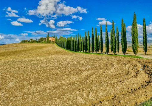 Obraz krajobraz Toskanii z cyprysami