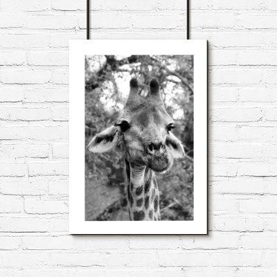 Plakat z żyrafą na swannie