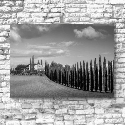 Czarno-biały obraz z cyprysowa drogą