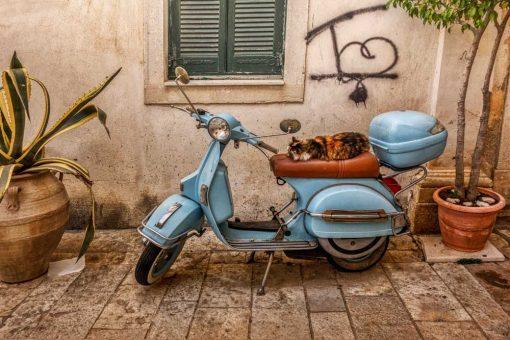 Obraz z kotkiem na skuterze - Korfu do nowoczesnych wnętrz