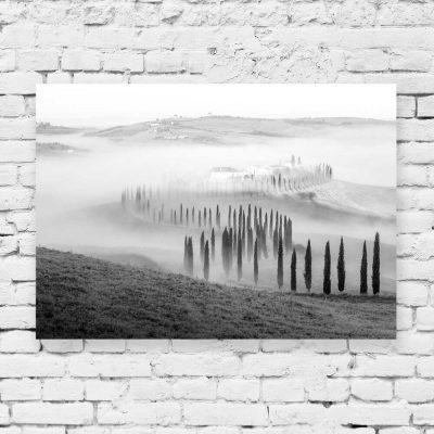 Obraz z topolami we mgle do dekoracji salonu
