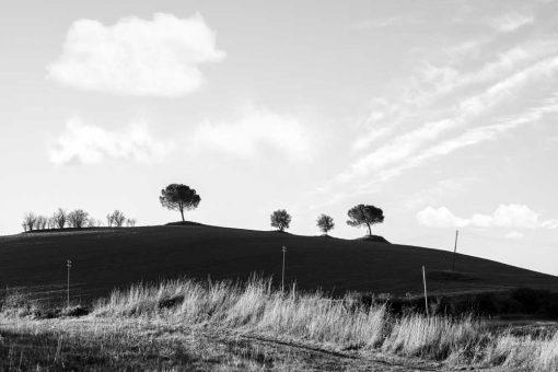 Obraz cztery drzewa pod szarym niebem