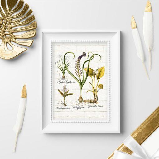 Botaniczny plakat z hiacyntem do przedpokoju