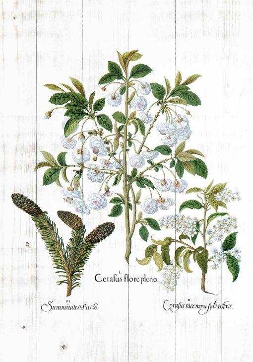 Plakat z białymi kwiatami na deskach do jadalni
