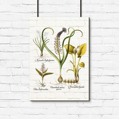 Botaniczny plakat z hiacyntem do salonu