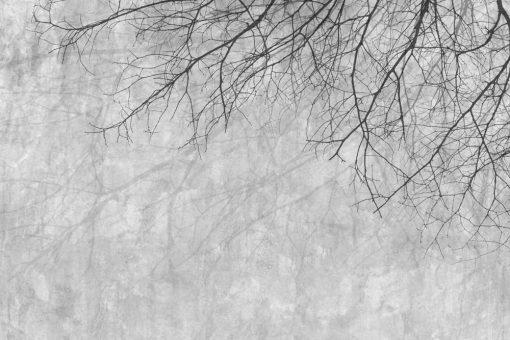 Tapeta z gałęziami drzew