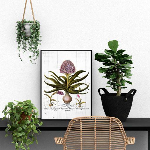 Botaniczny plakat z hiacyntem do biura