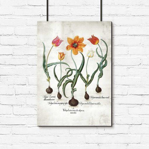 Botaniczny plakat - Ogniste tulipany do gabinetu