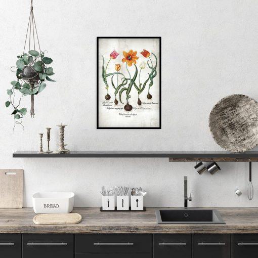 Botaniczny plakat - Ogniste tulipany do kuchni