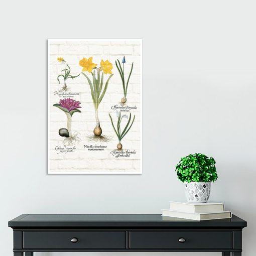 Botaniczny plakat z niebieskim szafirkiem do szkoły