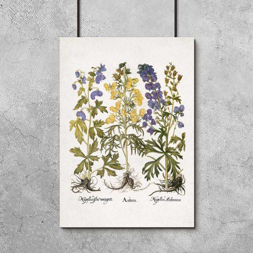 Edukacyjny plakat botaniczny - Tojad do biura