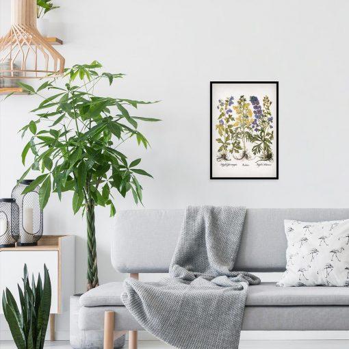 Edukacyjny plakat botaniczny - Tojad do salonu