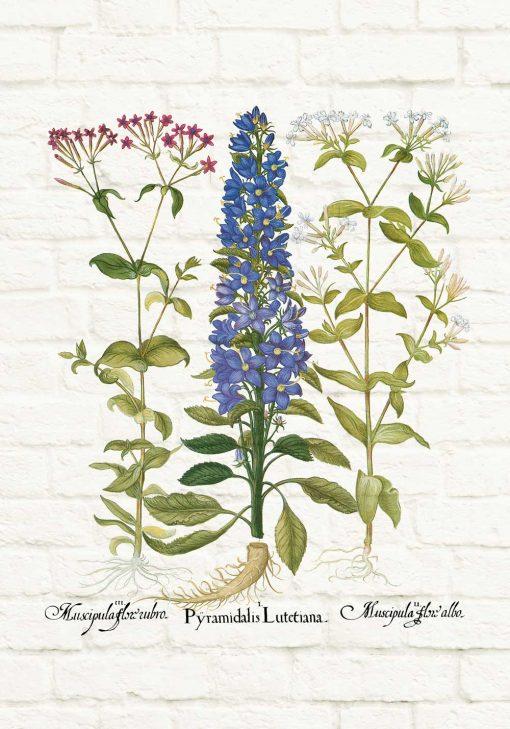 Edukacyjny plakat z niebieskim kwiatem do jadalni