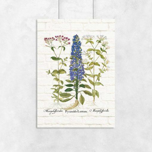 Edukacyjny plakat z niebieskim kwiatem do przedpokoju